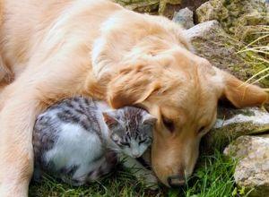 Dog lovin' cat